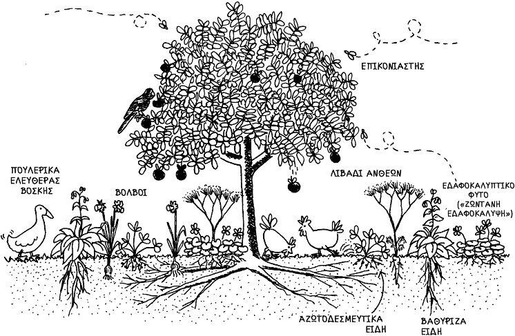 13. Το βρώσιμο δάσος: Ζώνη II