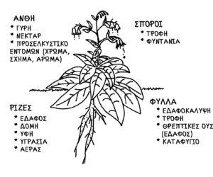 8. Η κληρονομιά των φυτών και των σπόρων μας