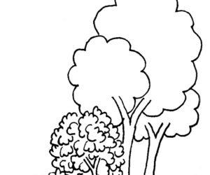 7. Δέντρα, δάση και ανεμοφράχτες