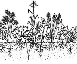 6. Έδαφος: ένας ζωντανός οργανισμός